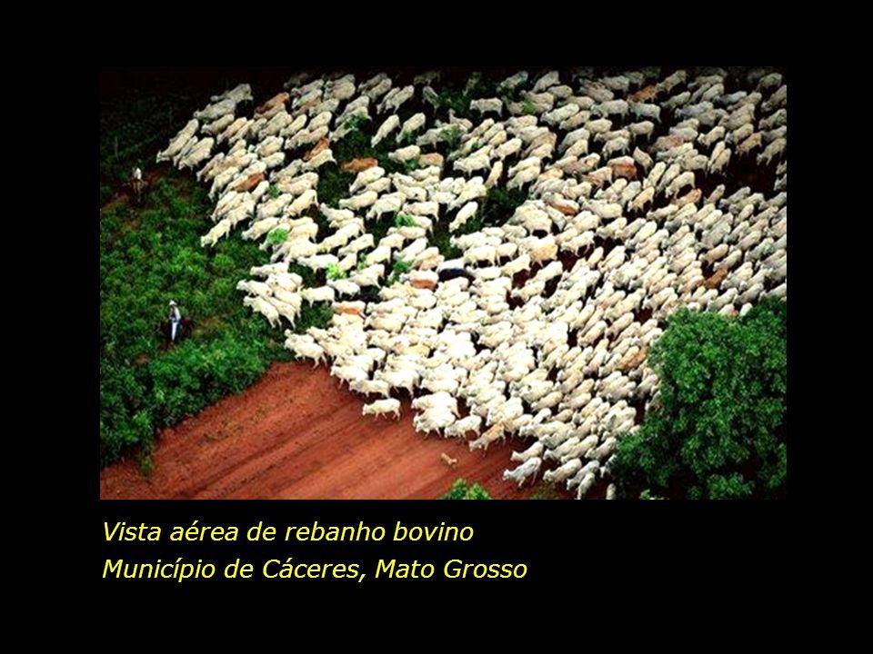 holdemqueen@hotmail.com Em breve, mais uma plantação de soja, ou mais um pasto para pecuária.