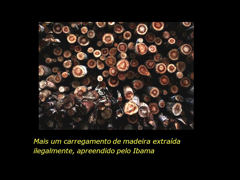 holdemqueen@hotmail.com Vista aérea de rebanho bovino Município de Cáceres, Mato Grosso
