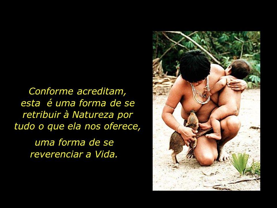 holdemqueen@hotmail.com Na aldeia dos guajás, um antigo costume da tribo é a adoção de pequenos animais órfãos. Porcos-do-mato, quatis, macacos, pregu