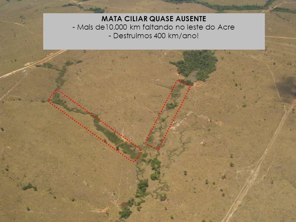 MATA CILIAR QUASE AUSENTE - Mais de10.000 km faltando no leste do Acre - Destruimos 400 km/ano!