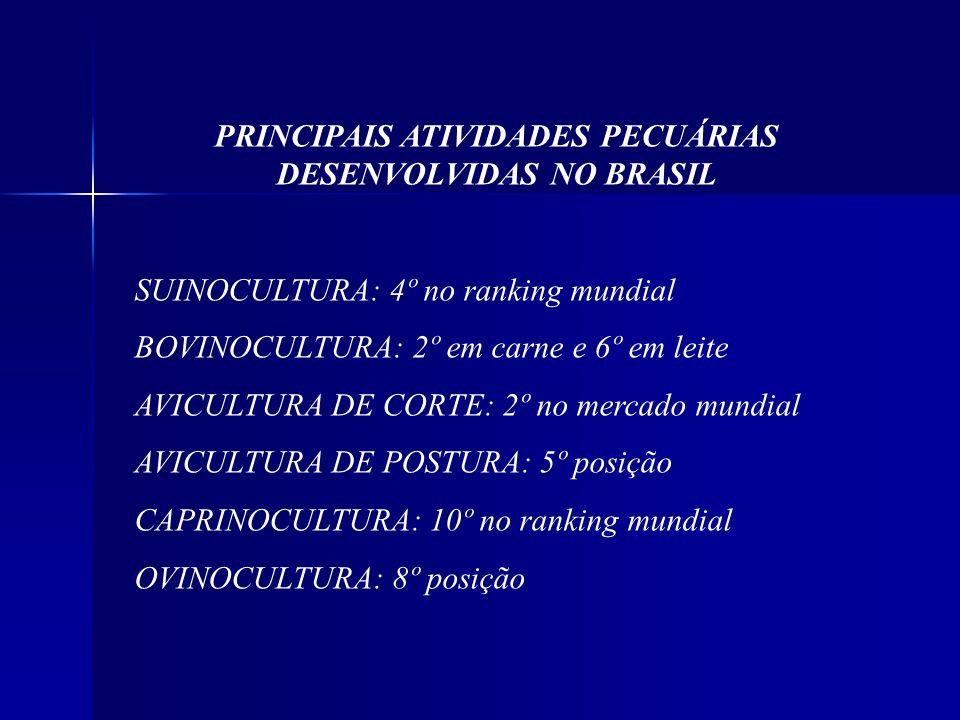 PRINCIPAIS ATIVIDADES PECUÁRIAS DESENVOLVIDAS NO BRASIL SUINOCULTURA: 4º no ranking mundial BOVINOCULTURA: 2º em carne e 6º em leite AVICULTURA DE COR