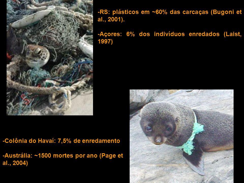 -RS: plásticos em ~60% das carcaças (Bugoni et al., 2001). -Açores: 6% dos indivíduos enredados (Laist, 1997) -Colônia do Havaí: 7,5% de enredamento -