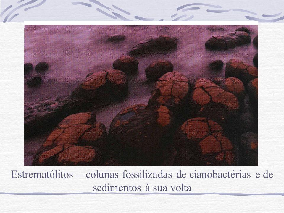 Estrematólitos – colunas fossilizadas de cianobactérias e de sedimentos à sua volta