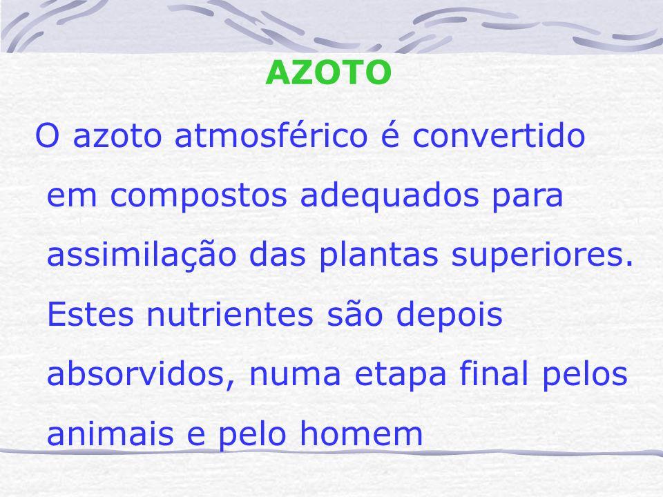 AZOTO O azoto atmosférico é convertido em compostos adequados para assimilação das plantas superiores. Estes nutrientes são depois absorvidos, numa et