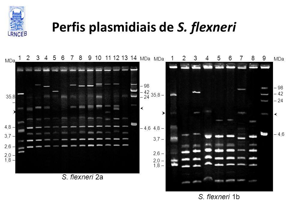 Perfis plasmidiais de S. flexneri 1 2 3 4 5 6 7 8 9 10 11 12 13 14 MDa – 98 – 42 – 24 – 4,6 MDa 35,8 – 4,8 – 3,7 – 2,6 – 2,0 – 1,8 – 1 2 3 4 5 6 7 8 9