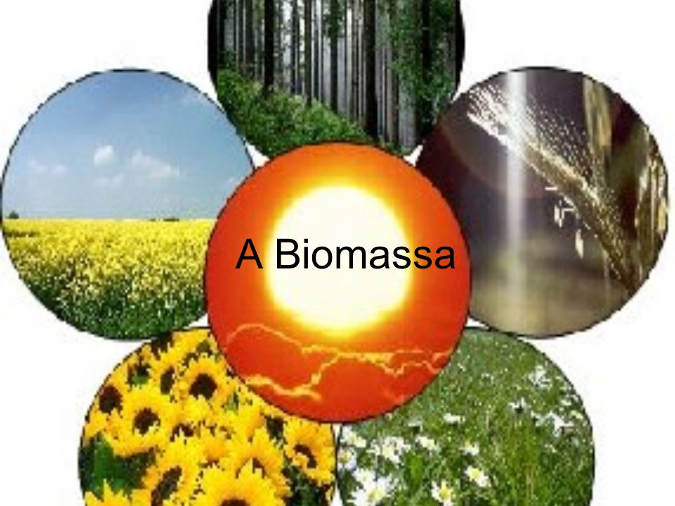 Biomassa é uma substância orgânica, produzida pelo processo de acumula ç ão de energia solar.