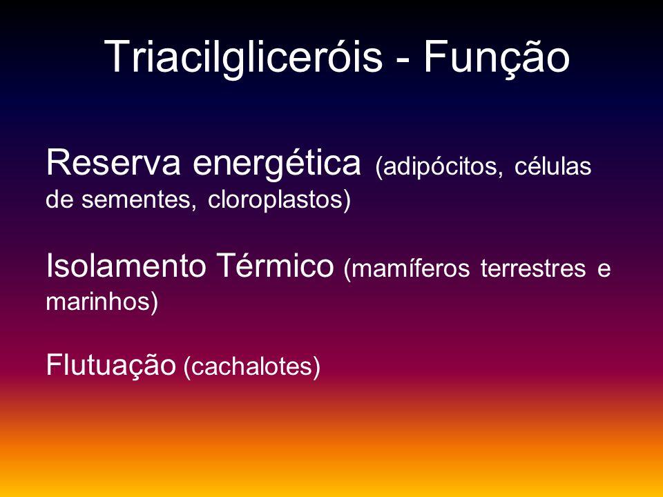 Triacilgliceróis - Função Reserva energética (adipócitos, células de sementes, cloroplastos) Isolamento Térmico (mamíferos terrestres e marinhos) Flut