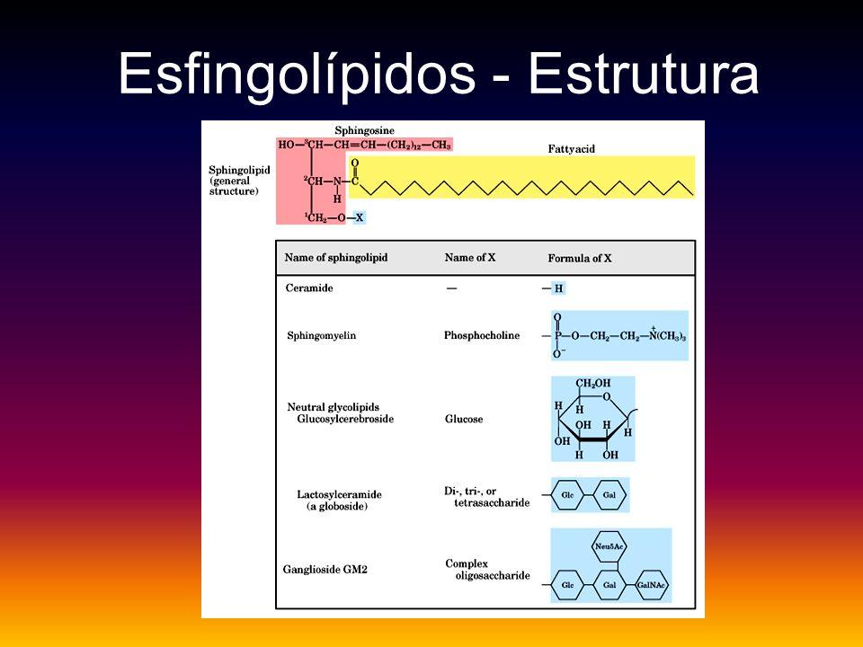 Esfingolípidos - Estrutura