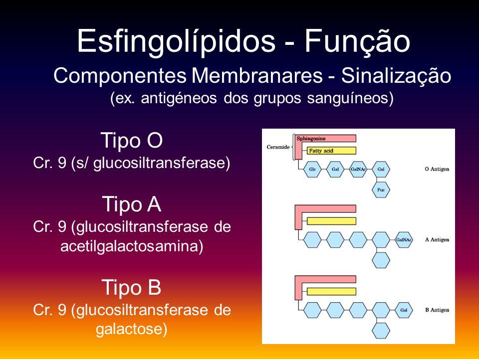 Esfingolípidos - Função Componentes Membranares - Sinalização (ex. antigéneos dos grupos sanguíneos) Tipo O Cr. 9 (s/ glucosiltransferase) Tipo A Cr.