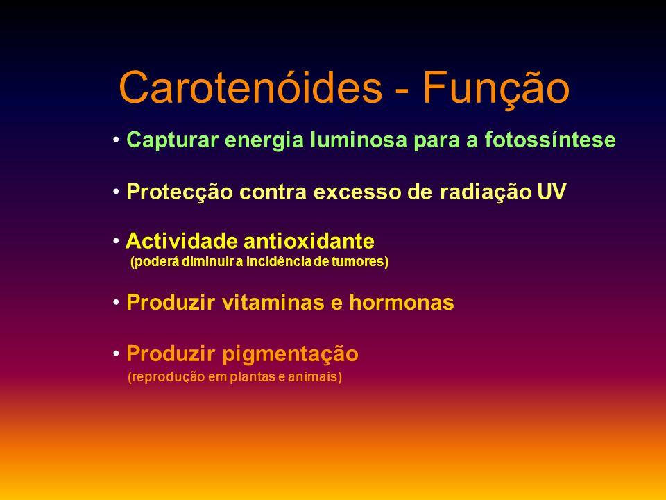 Carotenóides - Função Protecção contra excesso de radiação UV Capturar energia luminosa para a fotossíntese Actividade antioxidante (poderá diminuir a