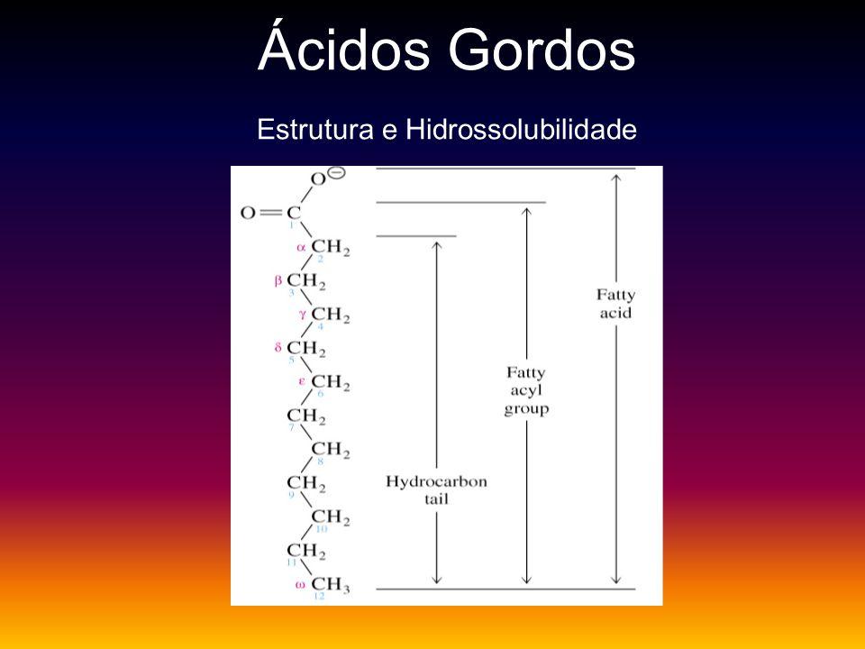 Ácidos Gordos Estrutura e Hidrossolubilidade