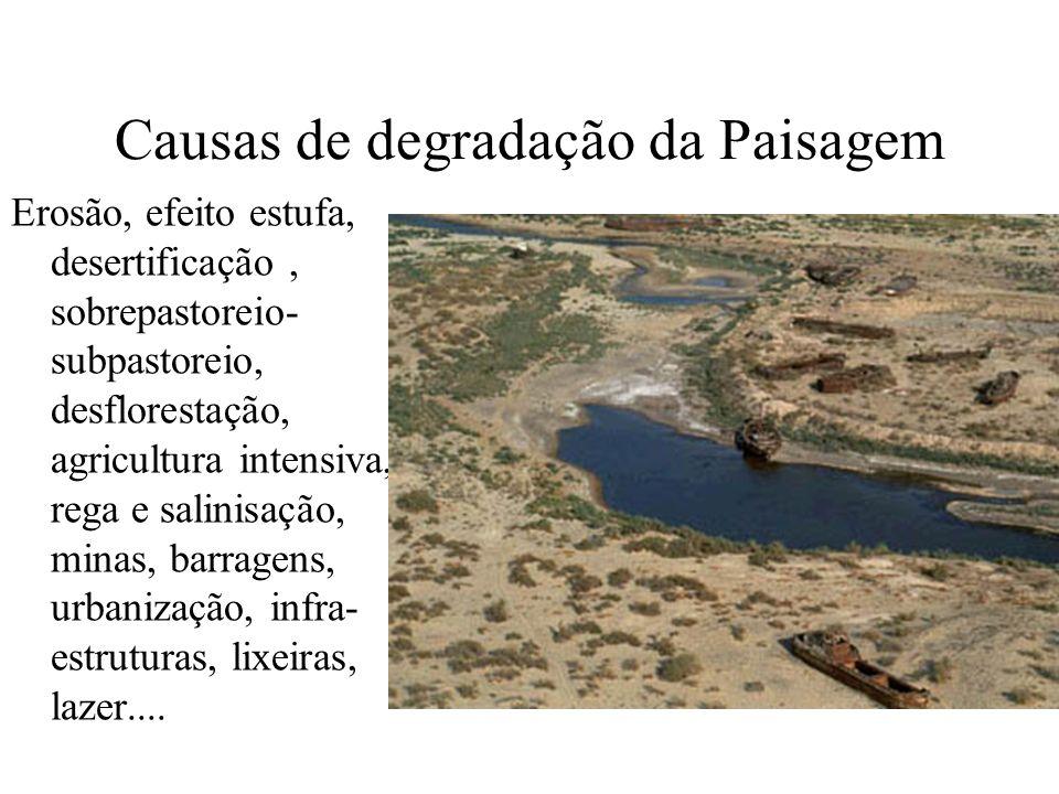 Causas de degradação da Paisagem Erosão, efeito estufa, desertificação, sobrepastoreio- subpastoreio, desflorestação, agricultura intensiva, rega e sa