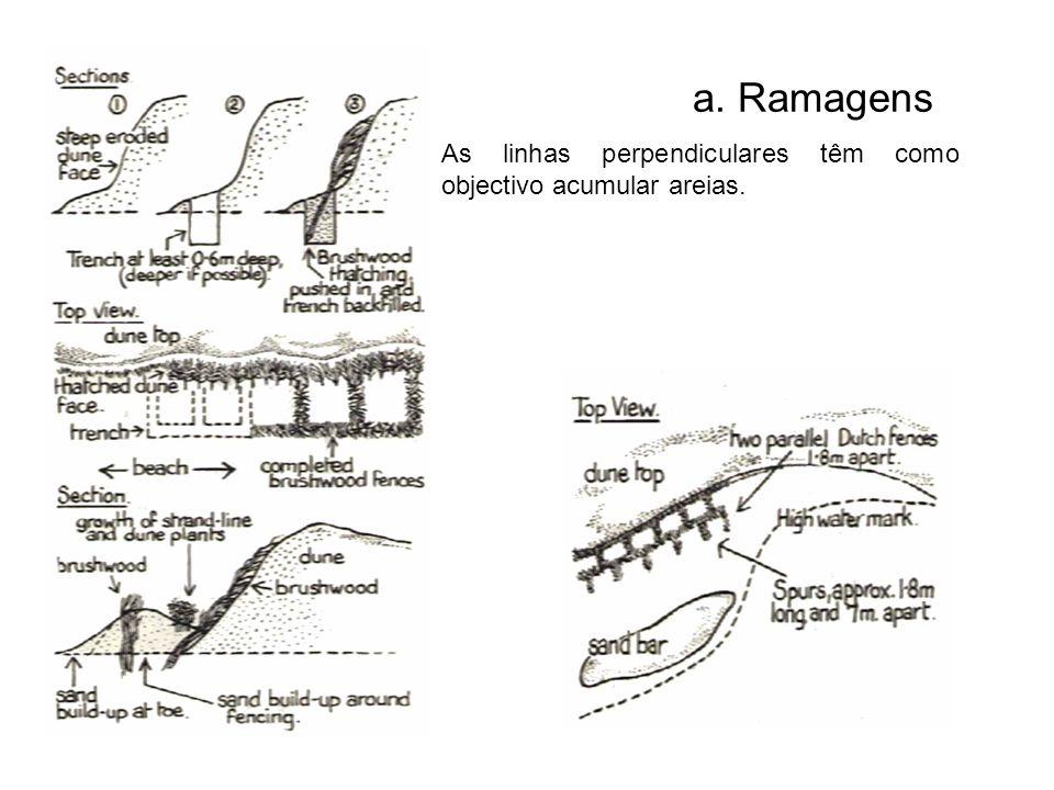 As linhas perpendiculares têm como objectivo acumular areias. a. Ramagens