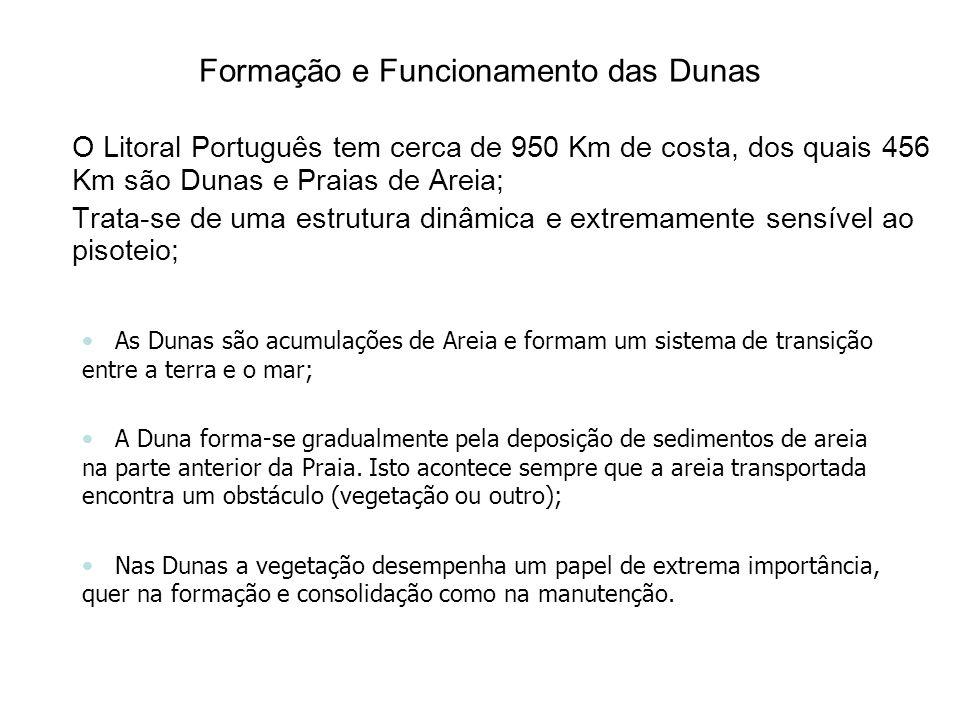 Formação e Funcionamento das Dunas O Litoral Português tem cerca de 950 Km de costa, dos quais 456 Km são Dunas e Praias de Areia; Trata-se de uma estrutura dinâmica e extremamente sensível ao pisoteio; As Dunas são acumulações de Areia e formam um sistema de transição entre a terra e o mar; A Duna forma-se gradualmente pela deposição de sedimentos de areia na parte anterior da Praia.