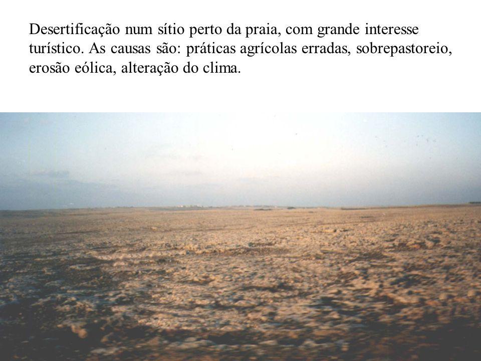 Desertificação num sítio perto da praia, com grande interesse turístico.