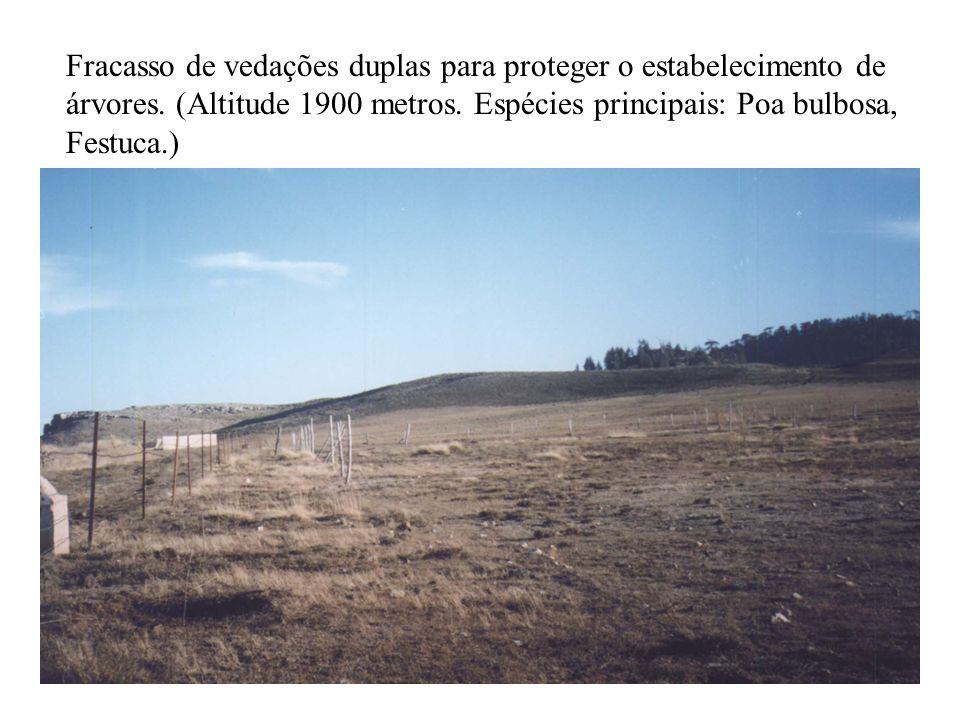 Fracasso de vedações duplas para proteger o estabelecimento de árvores.