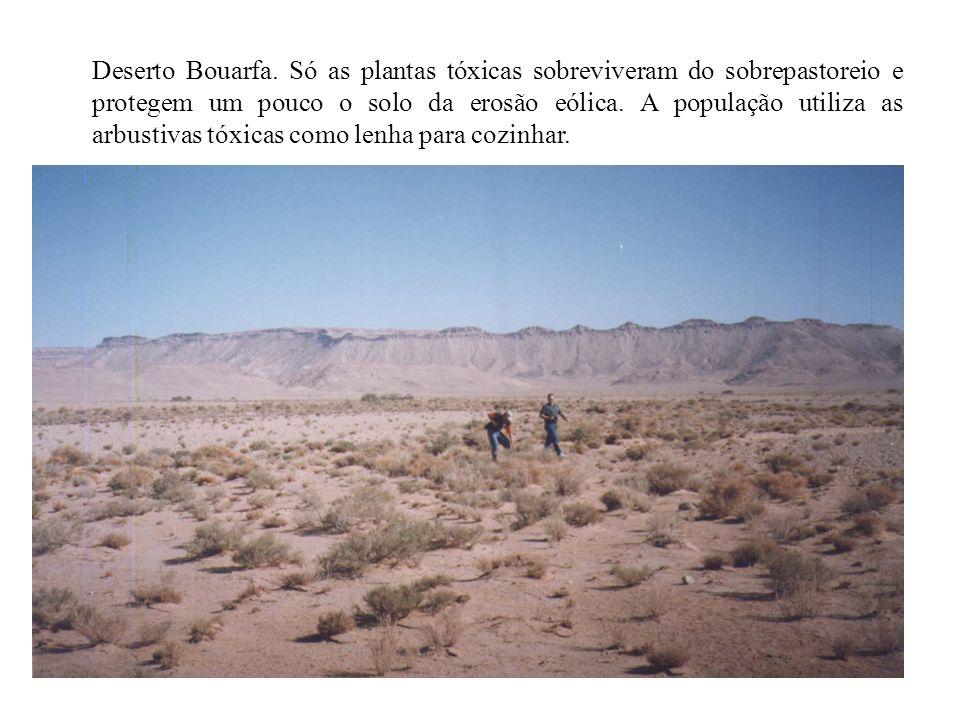 Deserto Bouarfa.