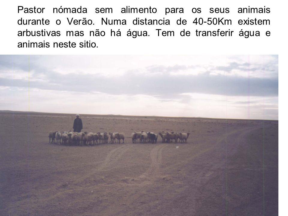 Pastor nómada sem alimento para os seus animais durante o Verão.