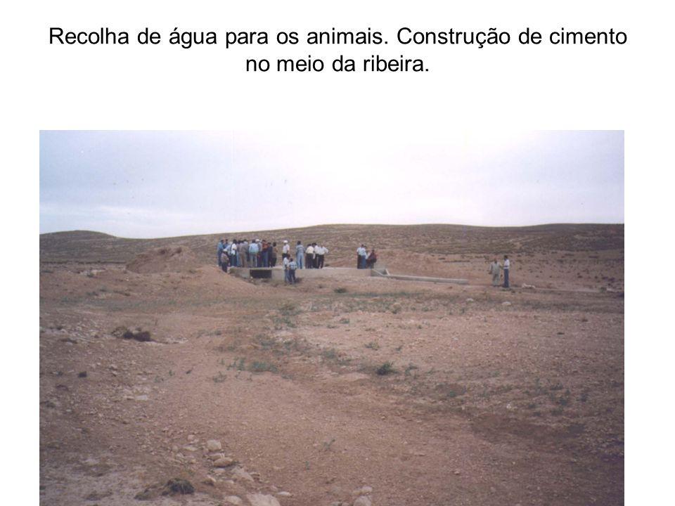 Recolha de água para os animais. Construção de cimento no meio da ribeira.