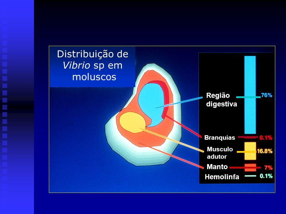 Distribuição de Vibrio sp em moluscos Região digestiva Branquias Musculo adutor Manto Hemolinfa