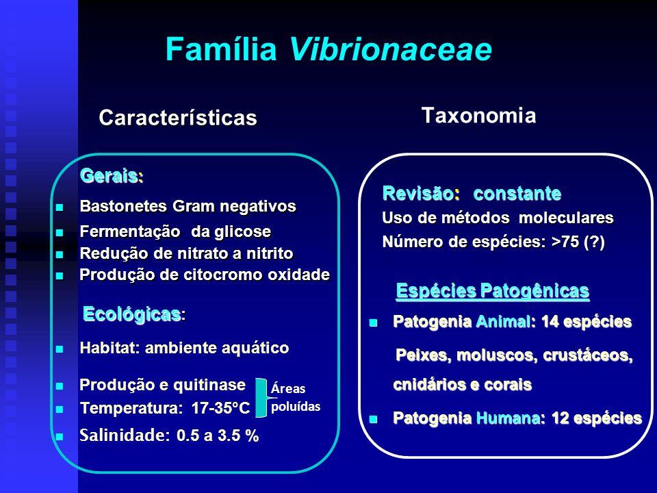 Família Vibrionaceae Gerais : Gerais : Bastonetes Gram negativos Fermentação da glicose Redução de nitrato a nitrito Produção de citocromo oxidade Eco