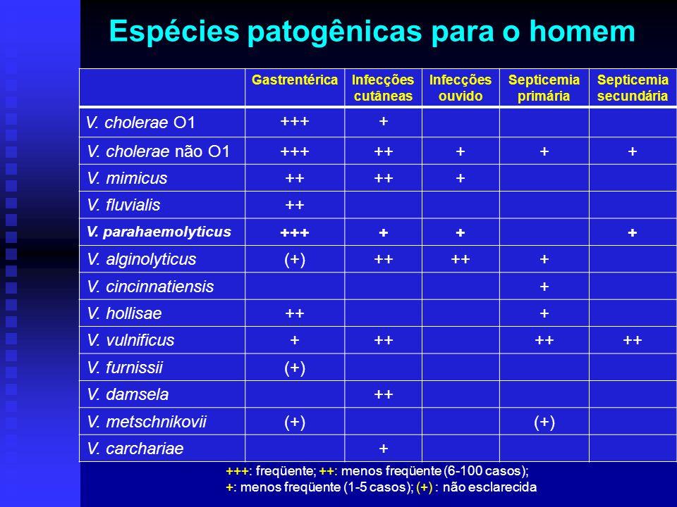 Características de espécies de Vibrio em diferentes meios de cultivo (identificação) 1- controle negativo; 2- arginina dehidrolase positiva; 3- lisina descarboxilase negativa; 4- ornitina descarboxilase positiva 4 3 2 1 Halofilismo TSI LIA MIO Agar uréia Christensen Soroaglutinação