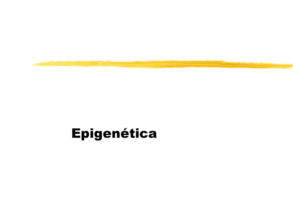 Fenómeno Epigenético zQualquer actividade reguladora de genes que não envolve mudanças na sequência do DNA (código genético) e que pode persistir por uma ou mais gerações