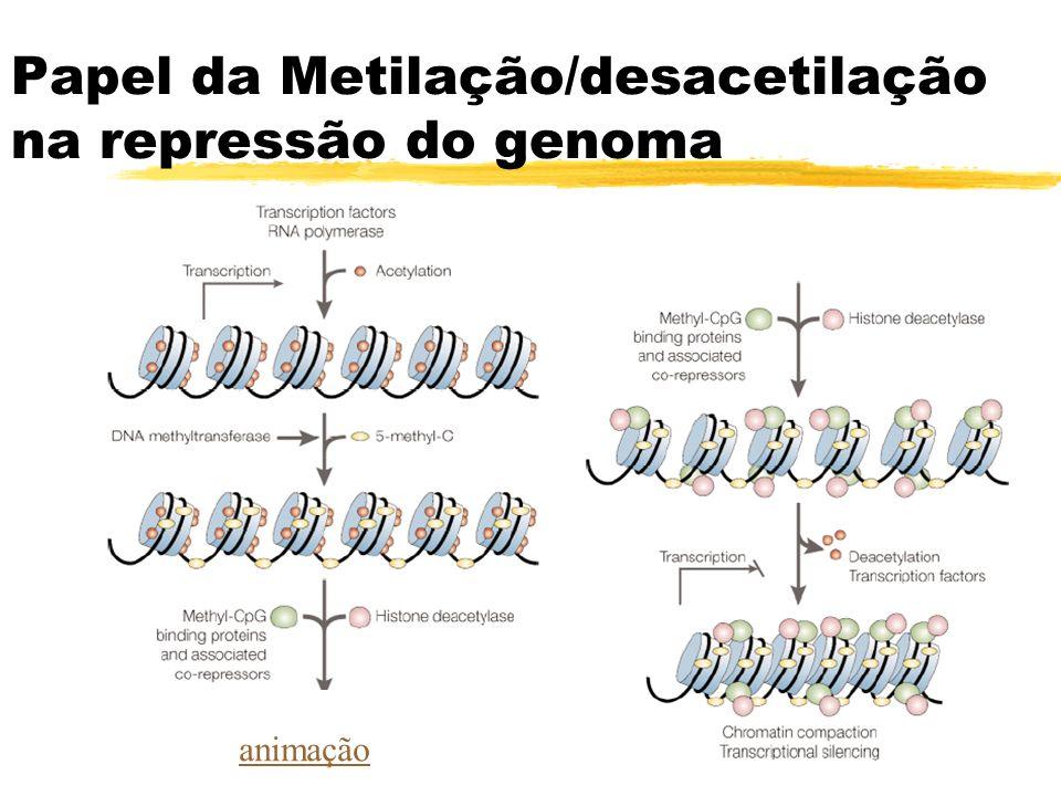 Papel da Metilação/desacetilação na repressão do genoma animação