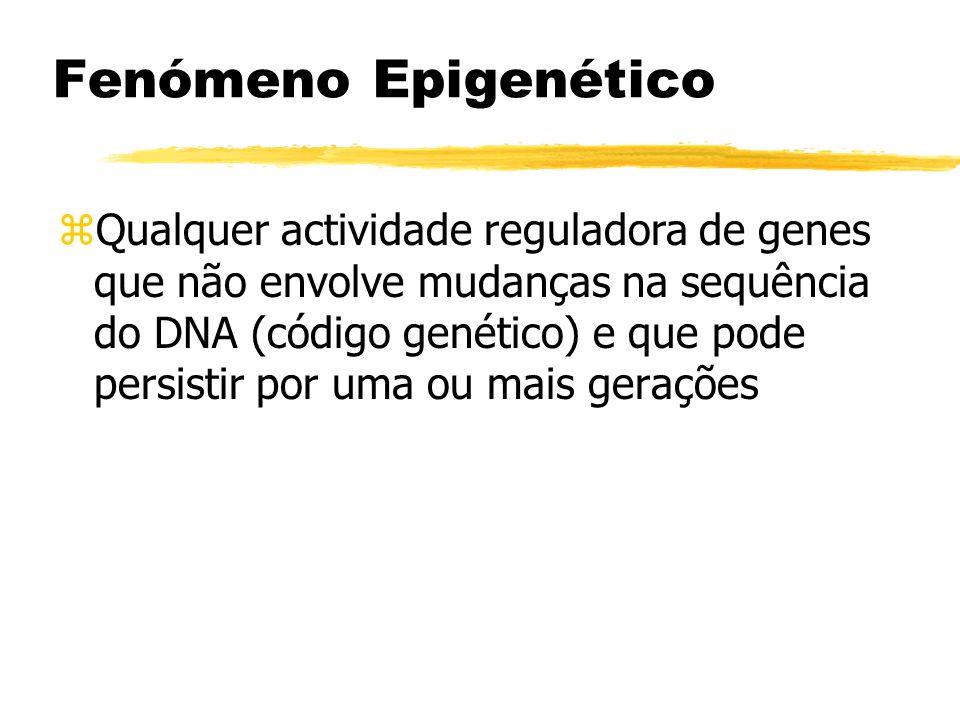 Fenómeno Epigenético zQualquer actividade reguladora de genes que não envolve mudanças na sequência do DNA (código genético) e que pode persistir por