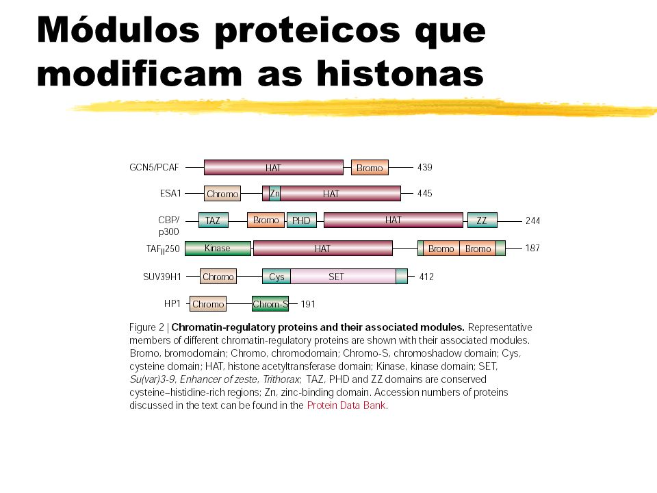 Módulos proteicos que modificam as histonas