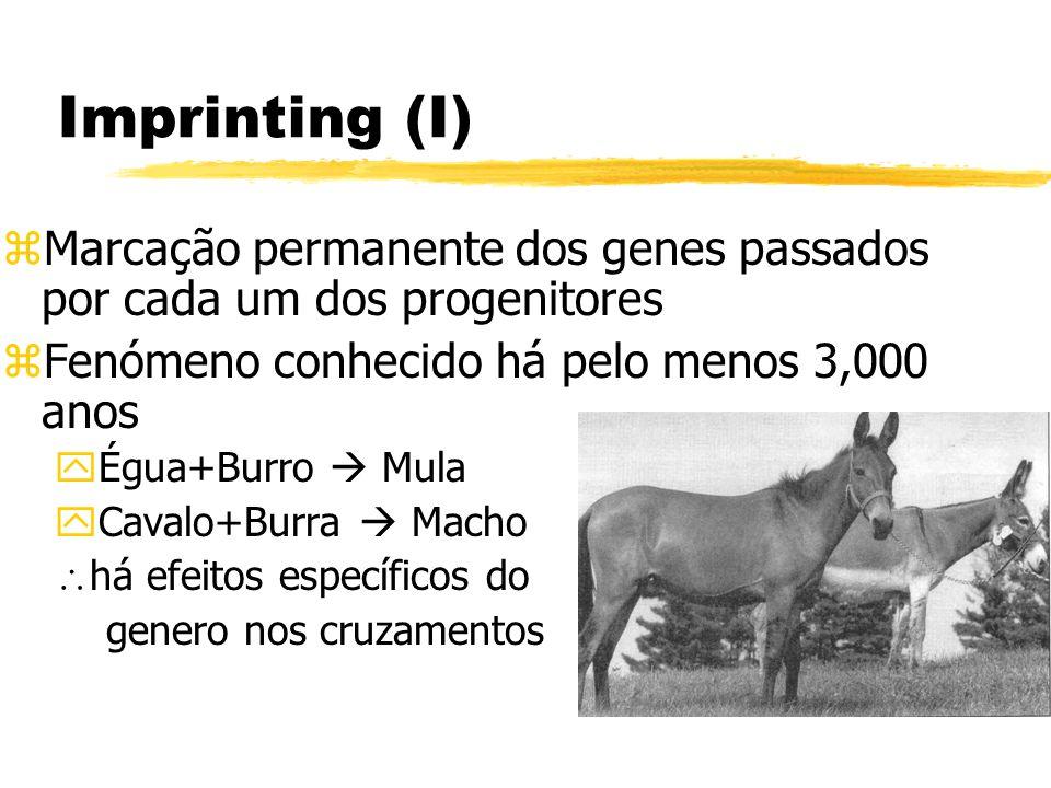 Imprinting (I) zMarcação permanente dos genes passados por cada um dos progenitores zFenómeno conhecido há pelo menos 3,000 anos yÉgua+Burro Mula yCav