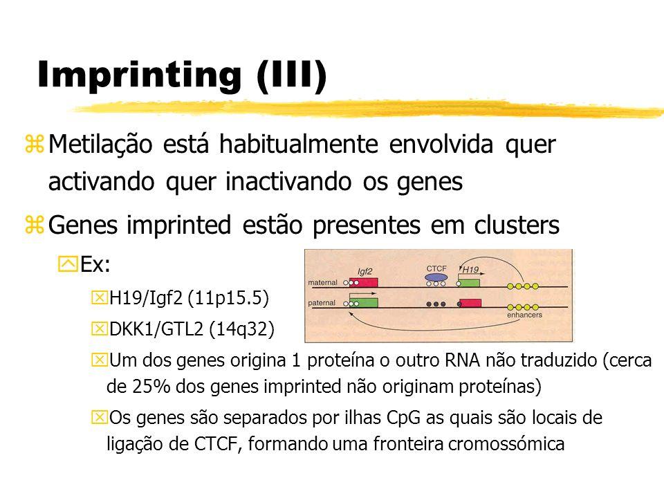 Imprinting (III) zMetilação está habitualmente envolvida quer activando quer inactivando os genes zGenes imprinted estão presentes em clusters yEx: xH