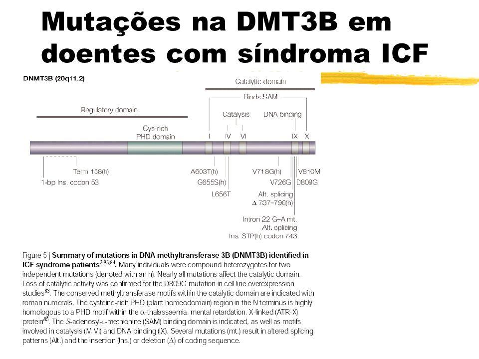 Mutações na DMT3B em doentes com síndroma ICF