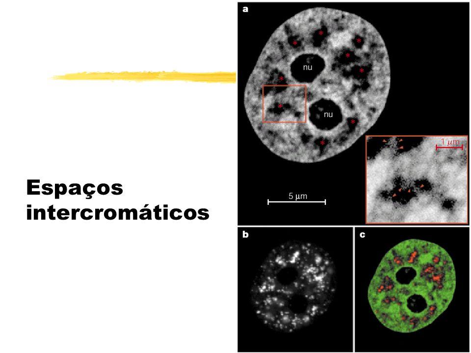 Modelos de modificação eu/heterocromática por alteração de histonas