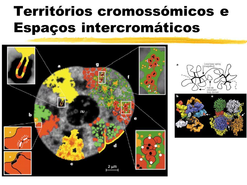 Imprinting (I) zMarcação permanente dos genes passados por cada um dos progenitores zFenómeno conhecido há pelo menos 3,000 anos yÉgua+Burro Mula yCavalo+Burra Macho há efeitos específicos do genero nos cruzamentos