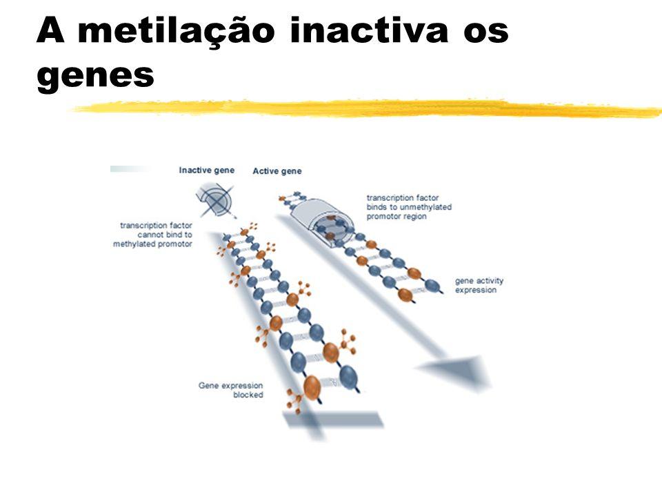 Metilação do DNA, ilhas CpG e defesa genómica