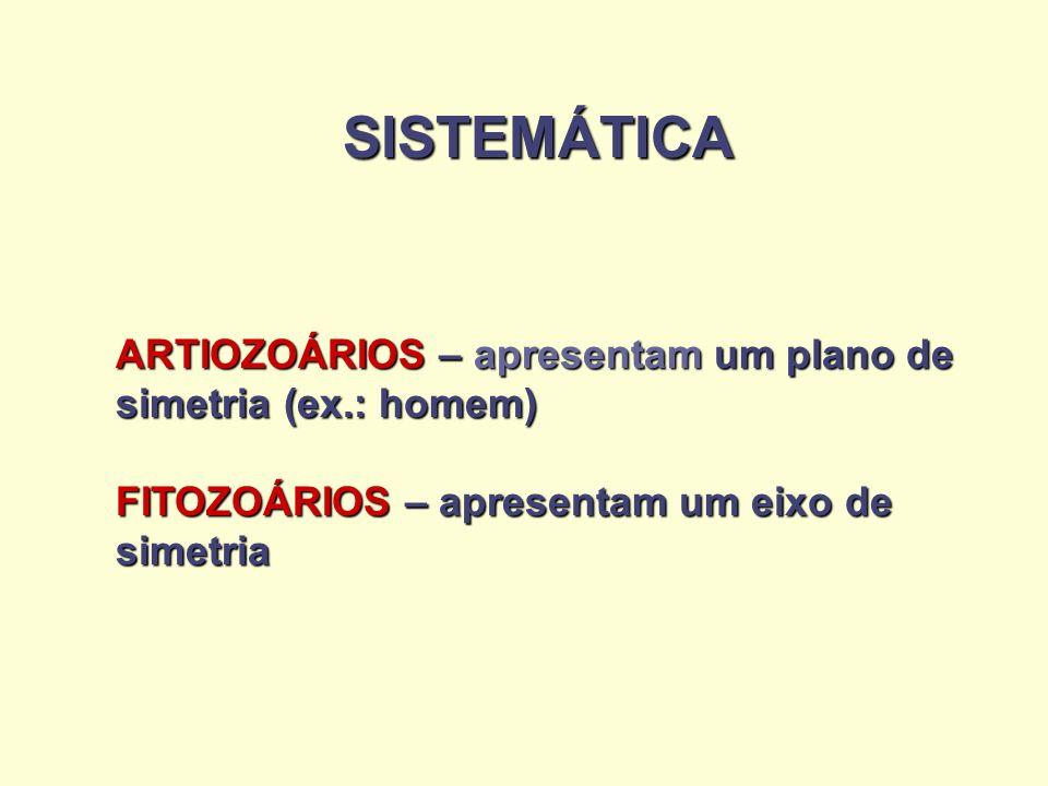 SISTEMÁTICA ARTIOZOÁRIOS – apresentam um plano de simetria (ex.: homem) FITOZOÁRIOS – apresentam um eixo de simetria