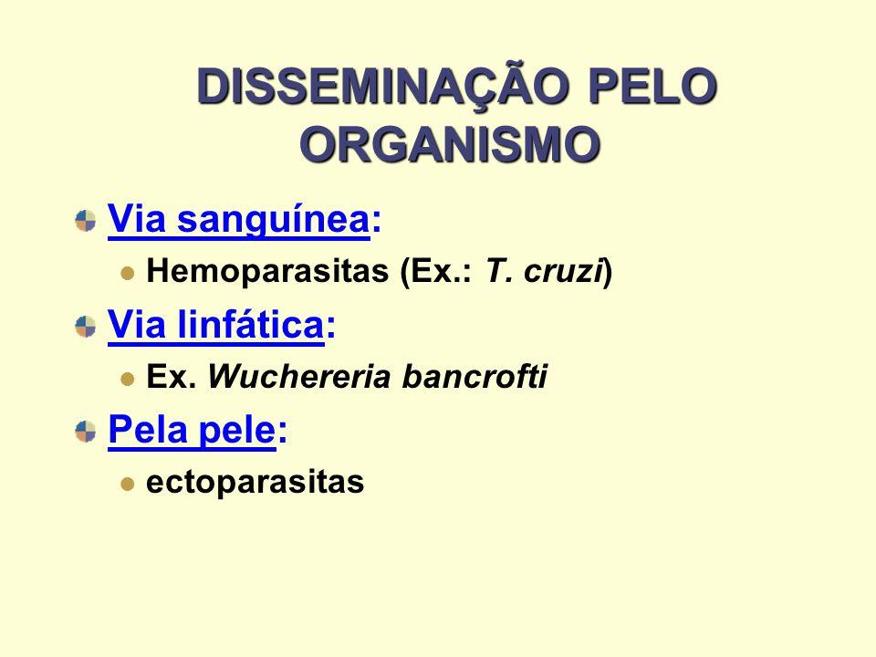 DISSEMINAÇÃO PELO ORGANISMO DISSEMINAÇÃO PELO ORGANISMO Via sanguínea: Hemoparasitas (Ex.: T. cruzi) Via linfática: Ex. Wuchereria bancrofti Pela pele