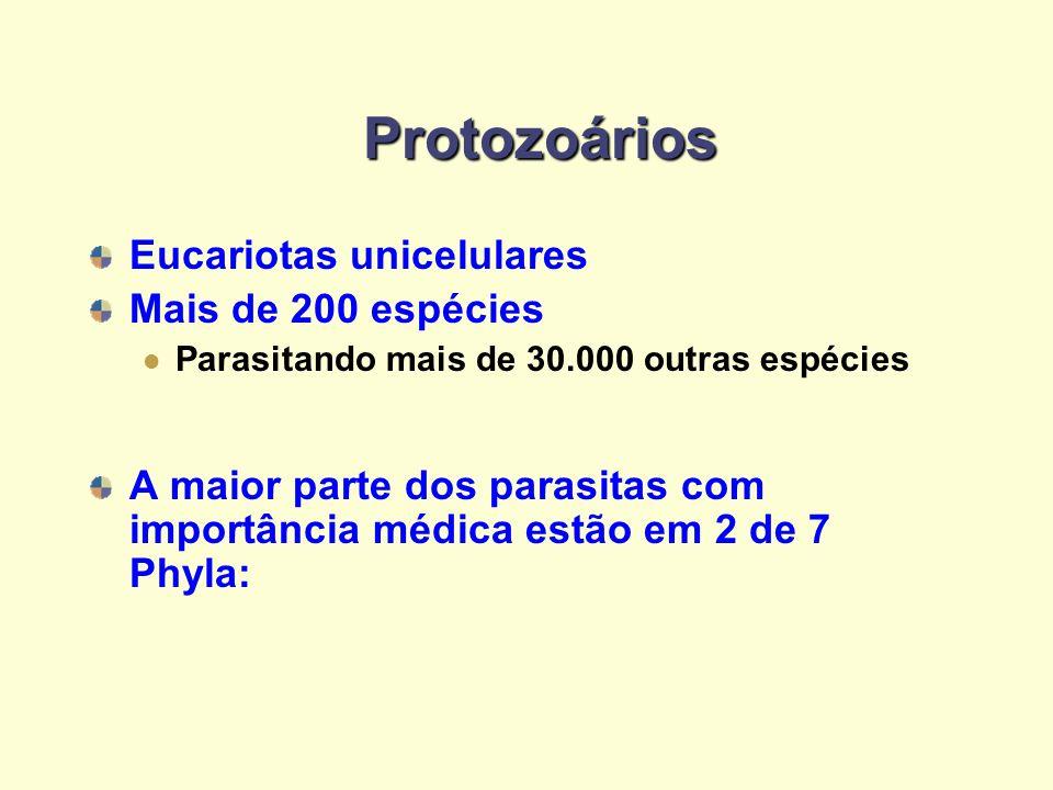 Protozoários Eucariotas unicelulares Mais de 200 espécies Parasitando mais de 30.000 outras espécies A maior parte dos parasitas com importância médic