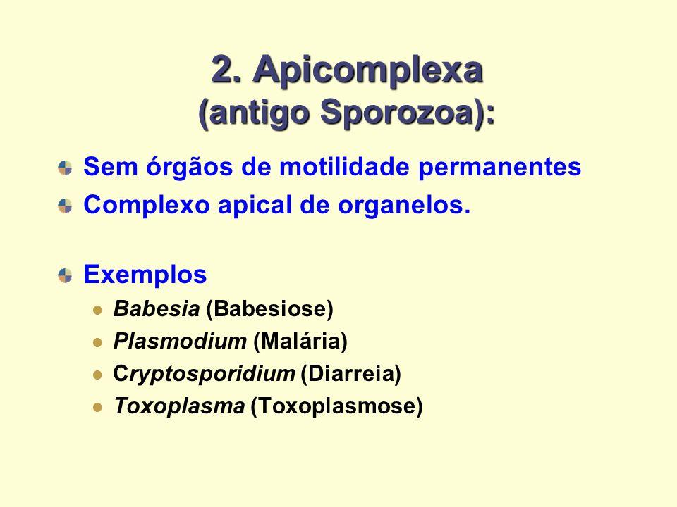 2. Apicomplexa (antigo Sporozoa): Sem órgãos de motilidade permanentes Complexo apical de organelos. Exemplos Babesia (Babesiose) Plasmodium (Malária)