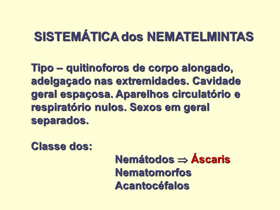 SISTEMÁTICA dos NEMATELMINTAS Tipo – quitinoforos de corpo alongado, adelgaçado nas extremidades. Cavidade geral espaçosa. Aparelhos circulatório e re