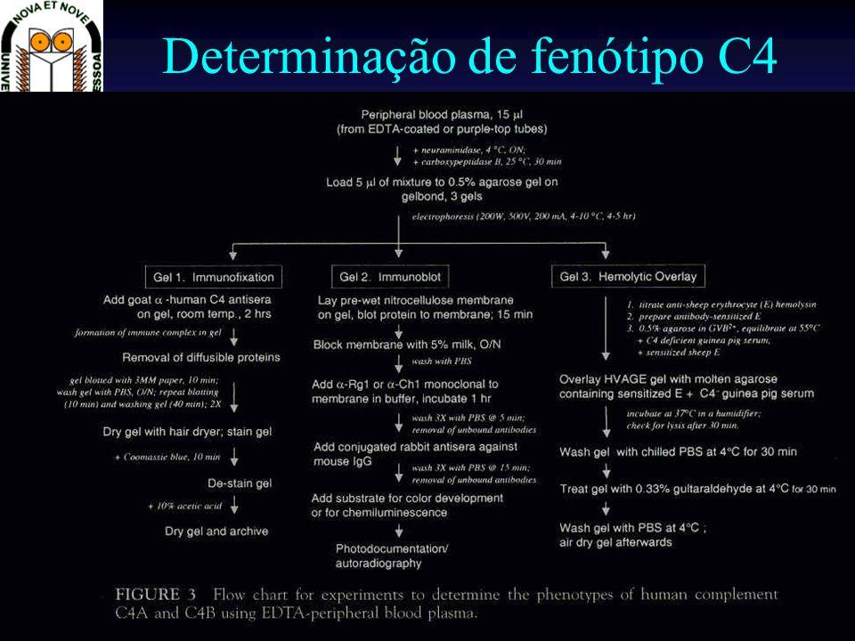 Técnicas de Imunologia Prof. Doutor José Cabeda Determinação de fenótipo C4