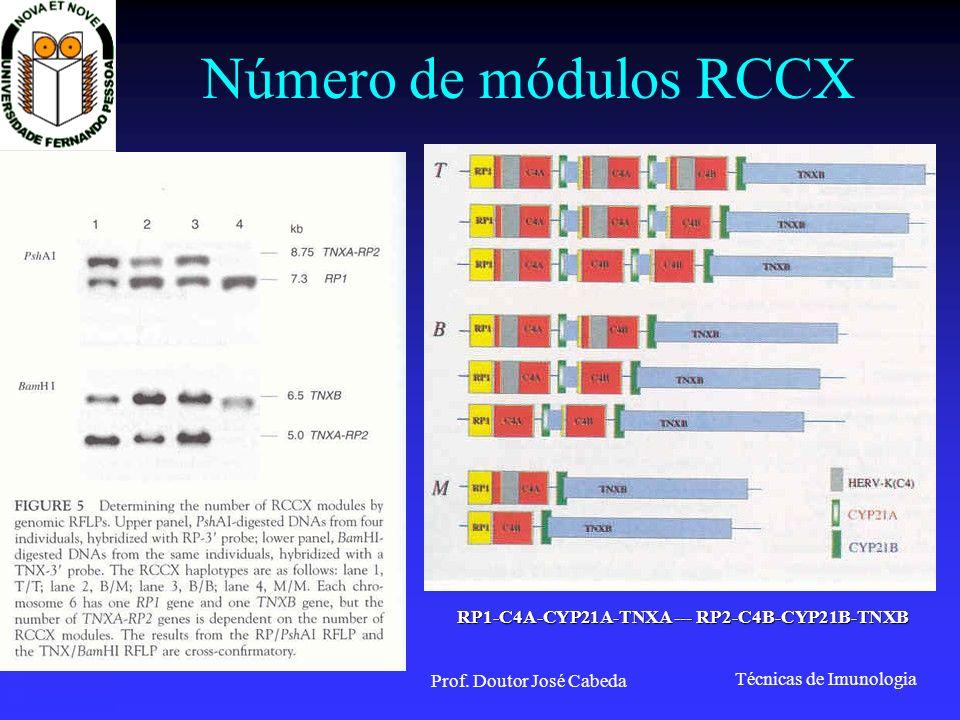 Técnicas de Imunologia Prof. Doutor José Cabeda Número de módulos RCCX RP1-C4A-CYP21A-TNXA --- RP2-C4B-CYP21B-TNXB