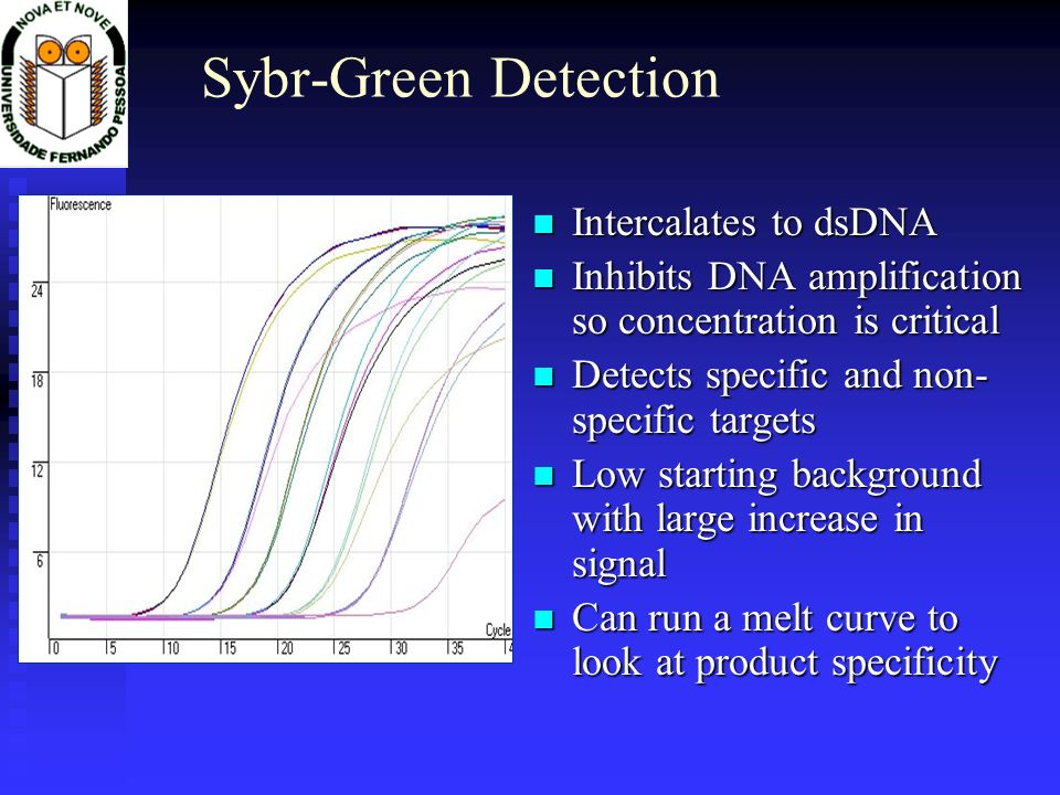Sybr-Green Detection Intercalates to dsDNA Intercalates to dsDNA Inhibits DNA amplification so concentration is critical Inhibits DNA amplification so