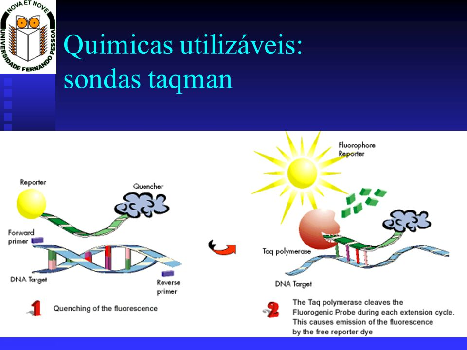 Quimicas utilizáveis: sondas taqman