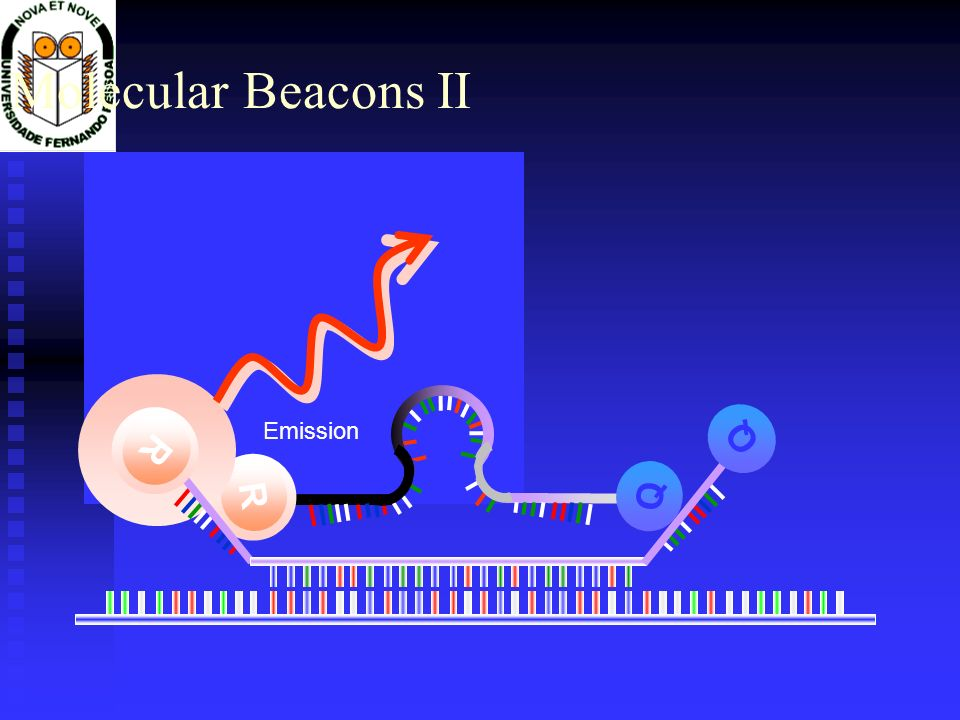 Molecular Beacons II R Q Excitation R Q Q R Emission