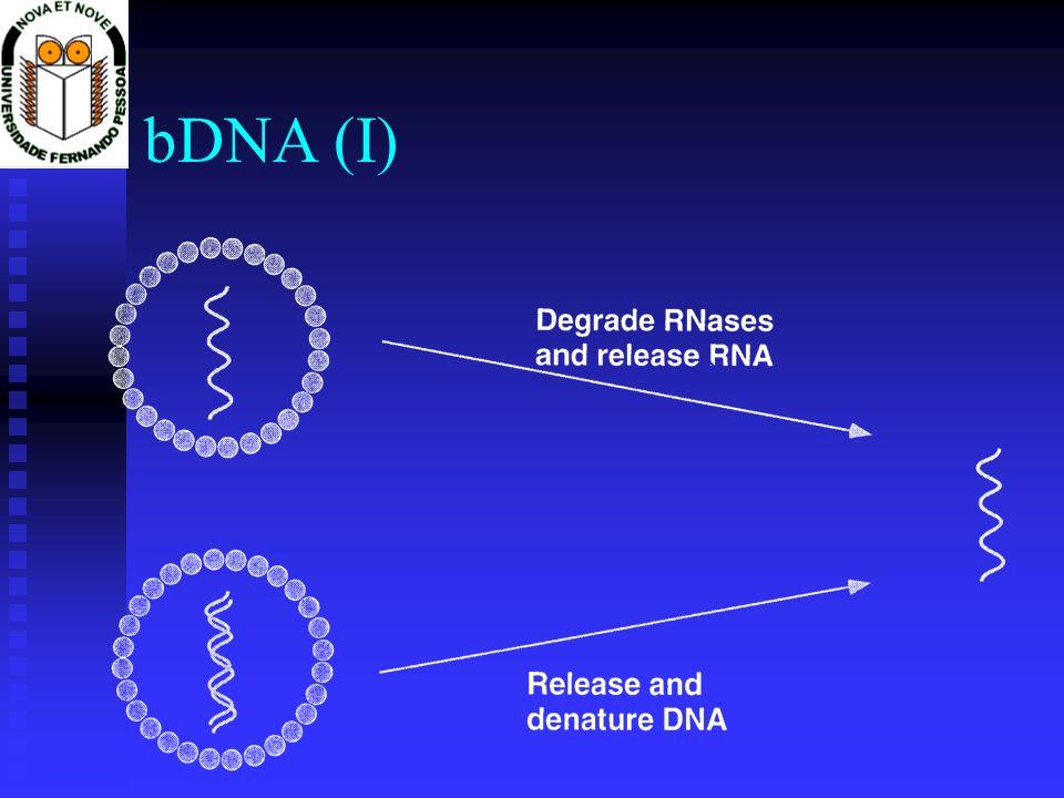 bDNA (I)