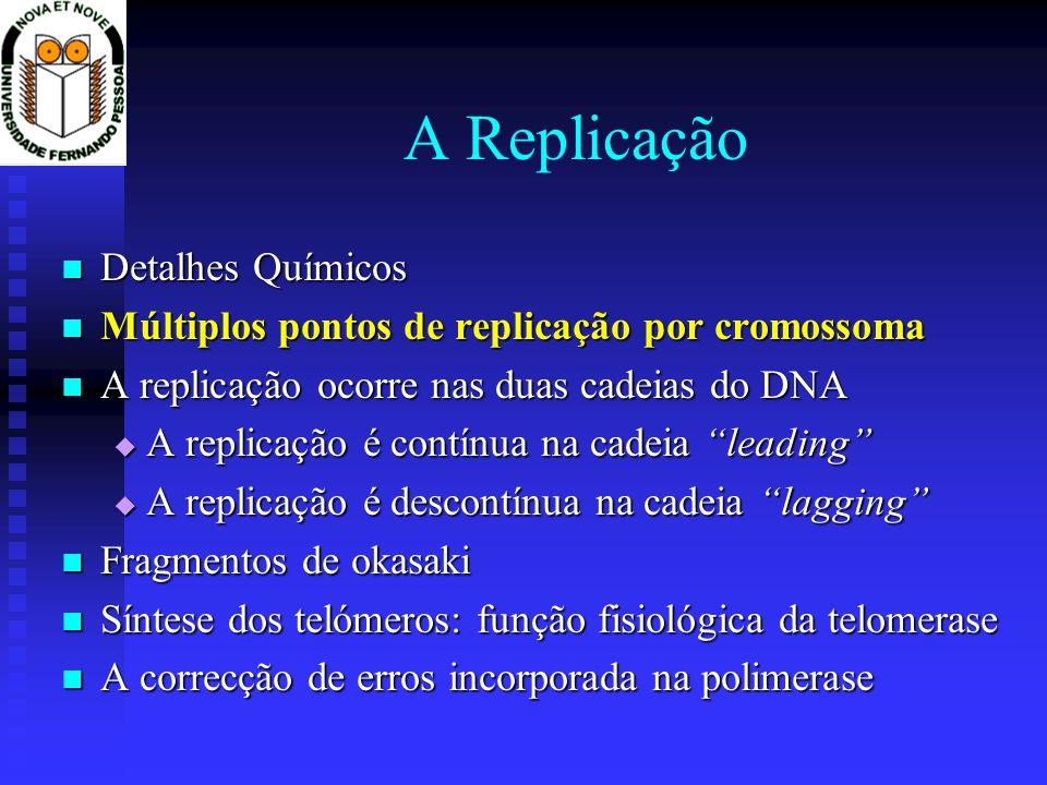 As telomerases Permitem que em cada divisão a cadeia lagging não fique mais curta depois da remoção do primer de RNA do fragmento de Okasaki Permitem que em cada divisão a cadeia lagging não fique mais curta depois da remoção do primer de RNA do fragmento de Okasaki São transcriptases reversas modificadas São transcriptases reversas modificadas produzem DNA a partir de um molde de RNA a elas ligado produzem DNA a partir de um molde de RNA a elas ligado Produzem DNA repetitivo Produzem DNA repetitivo Animação