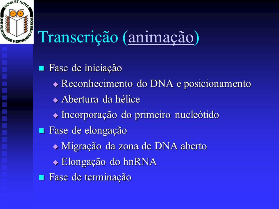 Transcrição (animação)animação Fase de iniciação Fase de iniciação Reconhecimento do DNA e posicionamento Reconhecimento do DNA e posicionamento Abert