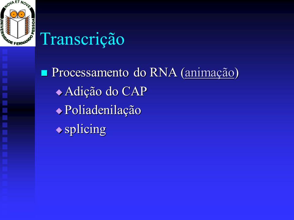 Transcrição Processamento do RNA (animação) Processamento do RNA (animação)animação Adição do CAP Adição do CAP Poliadenilação Poliadenilação splicing